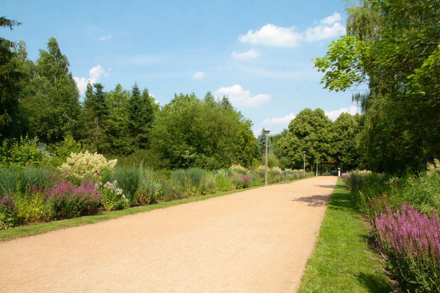 Bärlauch pankow botanischer volkspark Re: Re: